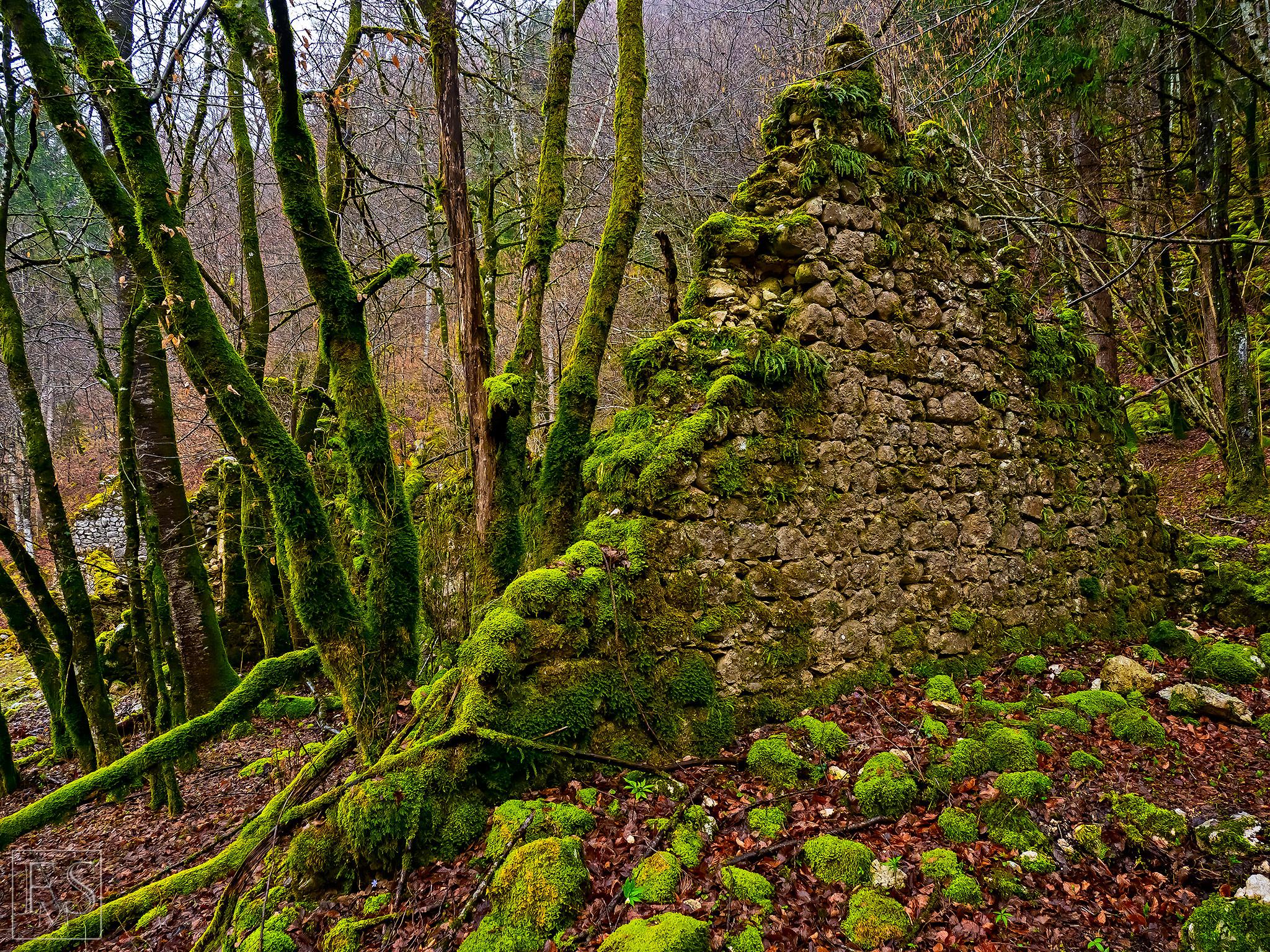 Crumpled Mossy Wall