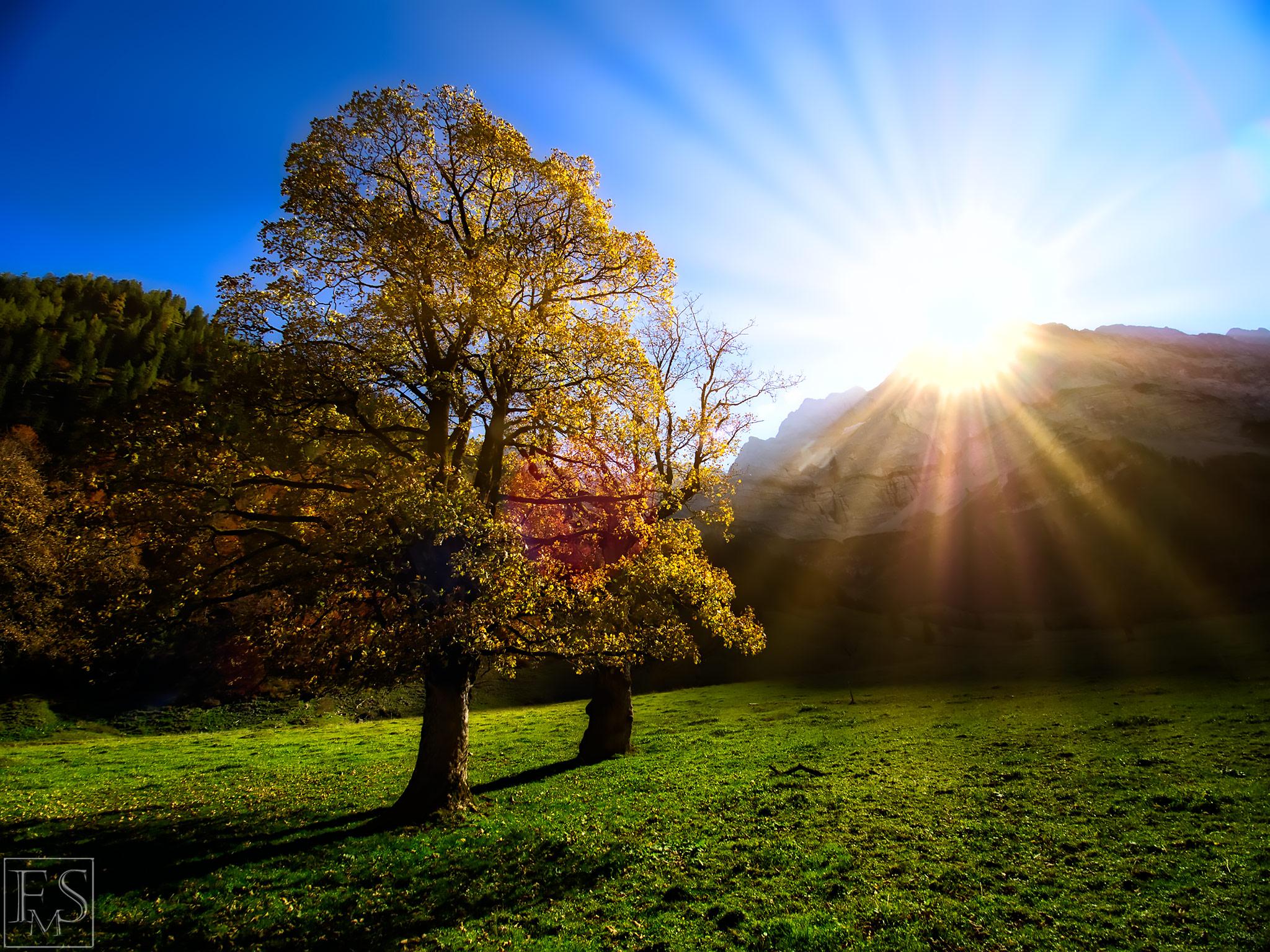 Ahorn Autumn