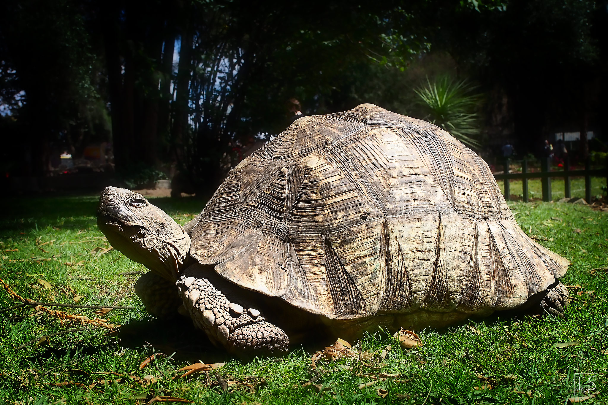 The Addis Tortoise