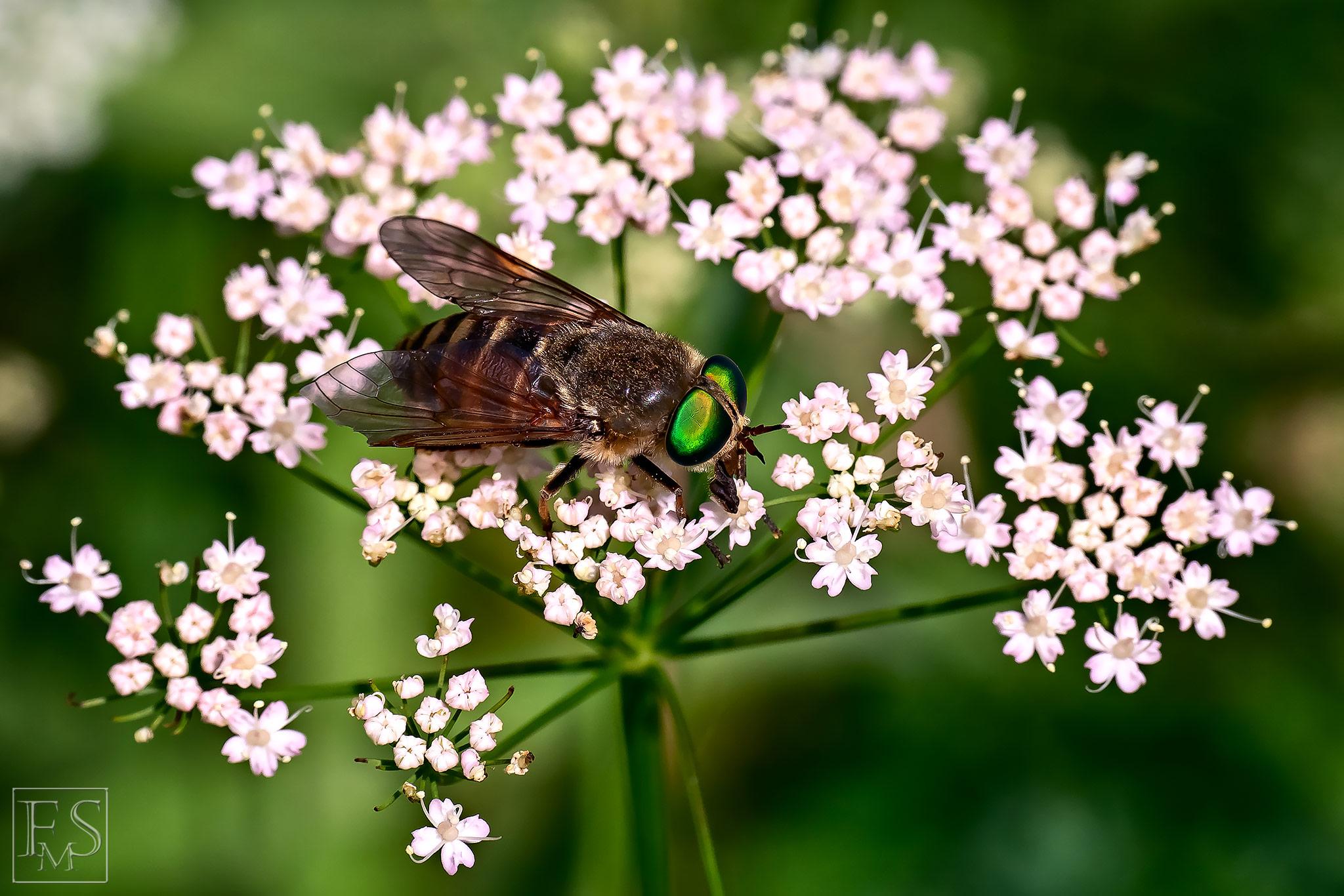 Green Eyez