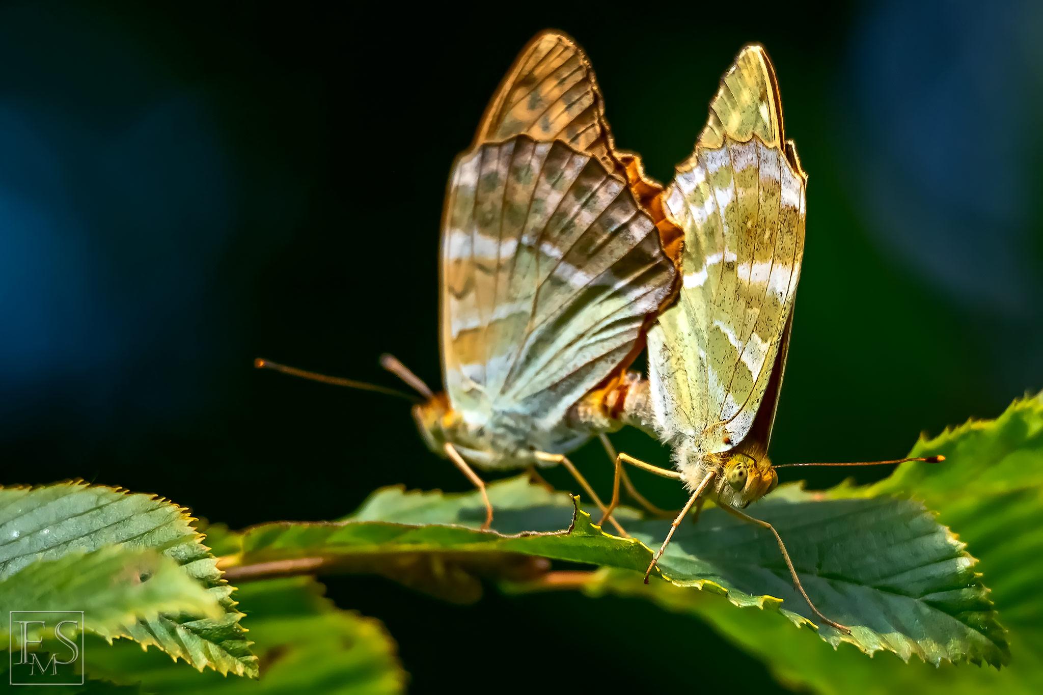 The Coupling Butterflies